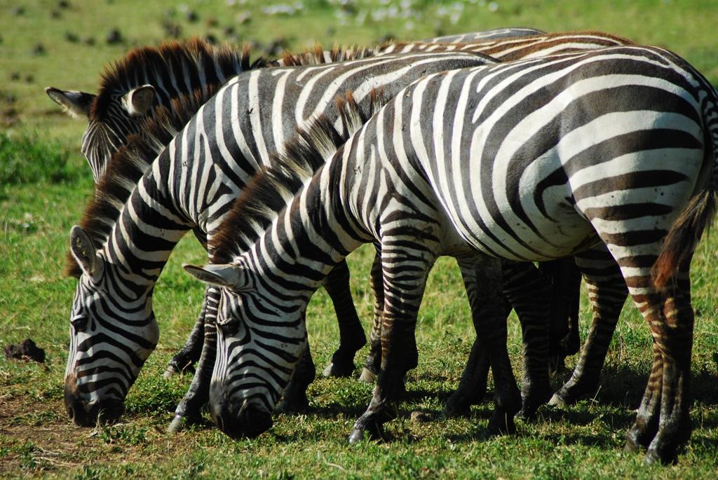 3 Day Ngorongoro Walking Tour