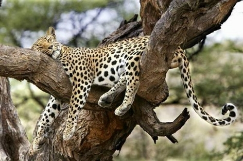 7 Day Tour to Serengeti, Ngorongoro