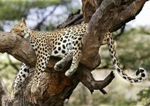 7 Day Tour to Serengeti/Ngorongoro/Tarangire