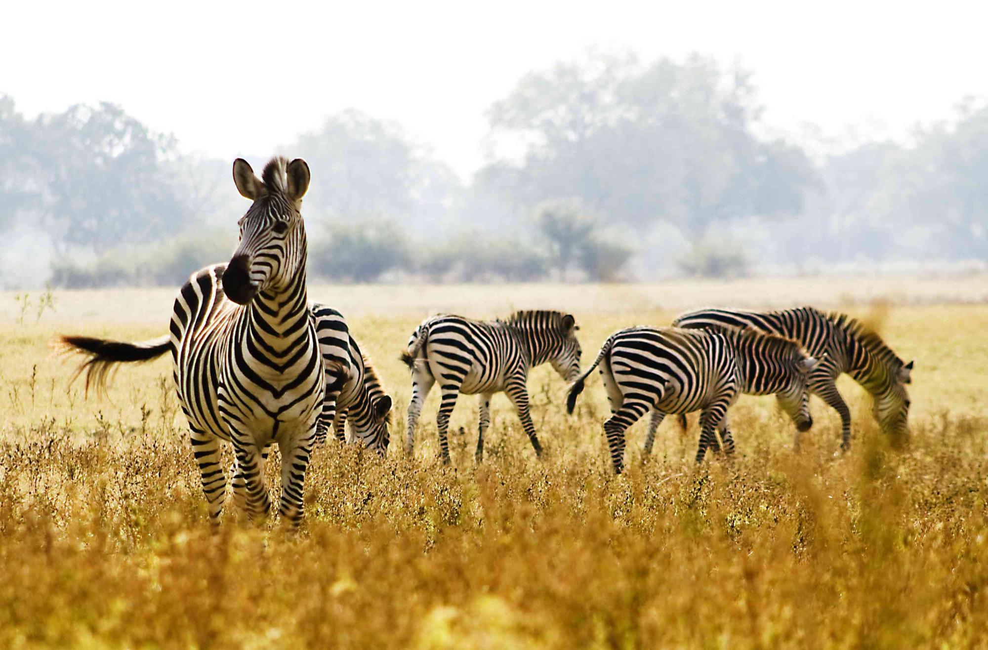 5 Day Lodging Safari to Manyara, Serengeti and Ngorongoro