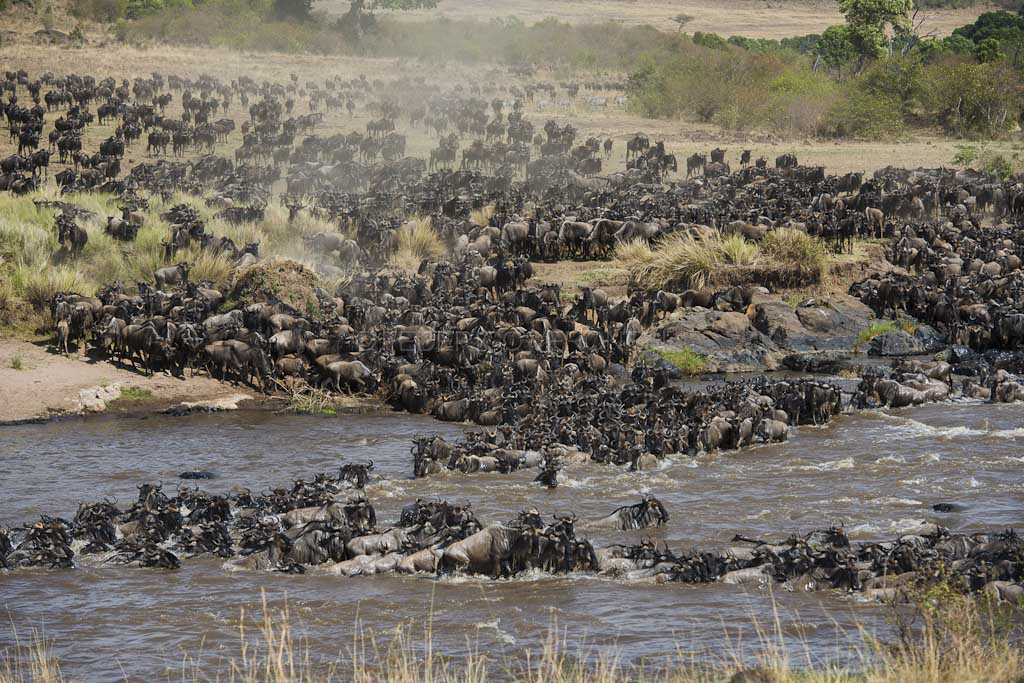9 Day Program: Serengeti Wildebeest Migration Safari