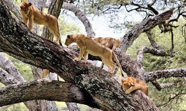 5 Days Safari and 7 Day Machame Climb