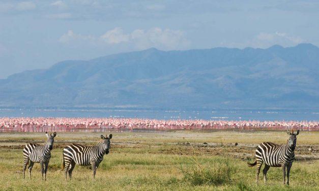 1 Day Trip to Lake Manyara