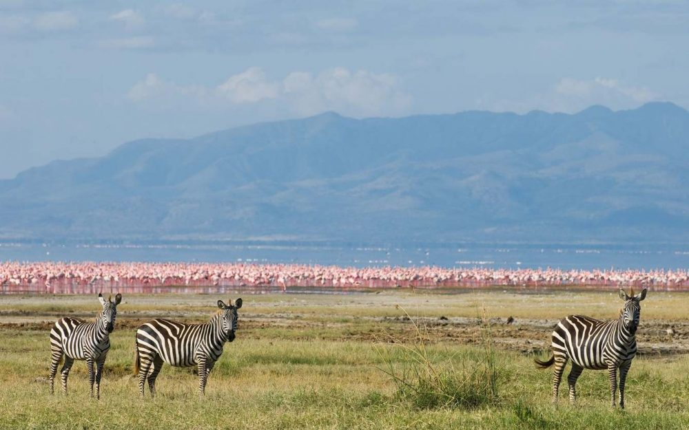 Hotels In Meru National Park