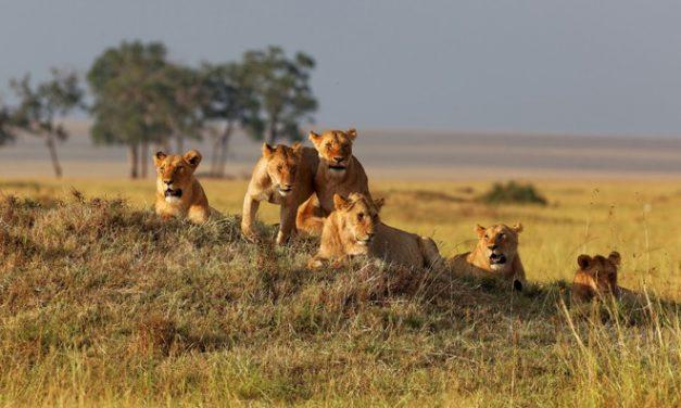 7 Day Safari in Masai Mara and Lake Nakuru