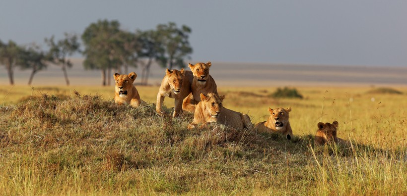 7 Day Safari in Masai Mara and Lake Nakuru