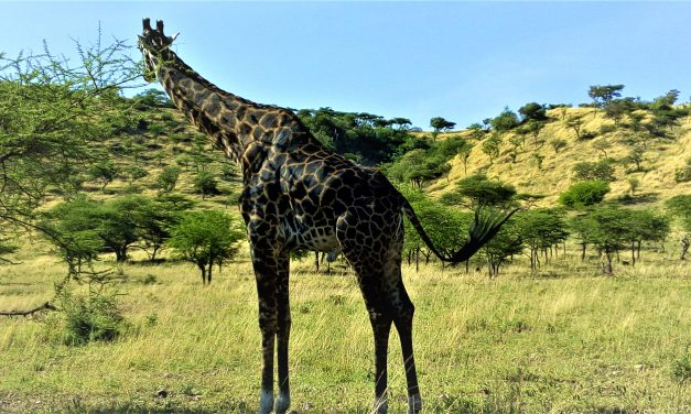 1 Day Safari to Arusha National Park