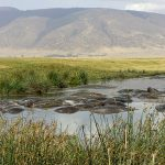 1 Day Tanzania Safari Tour /Ngorongoro, For Us$ 295/Person