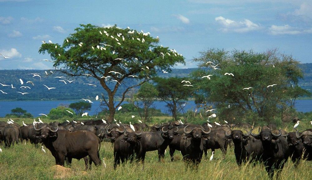 Uganda Safari -14-Days