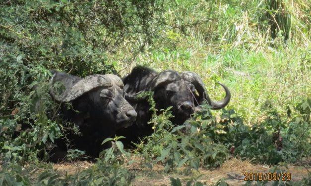 3 Day to Lake Eyasi Tanzania Luxury Safari