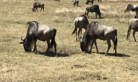 6 Day Tour to Serengeti and Ngorongoro