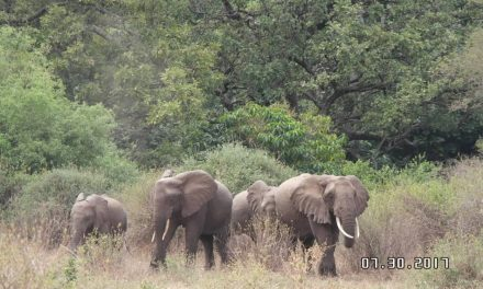 2 Days Camping Safari Tarangire National Park/Daily Joining Group