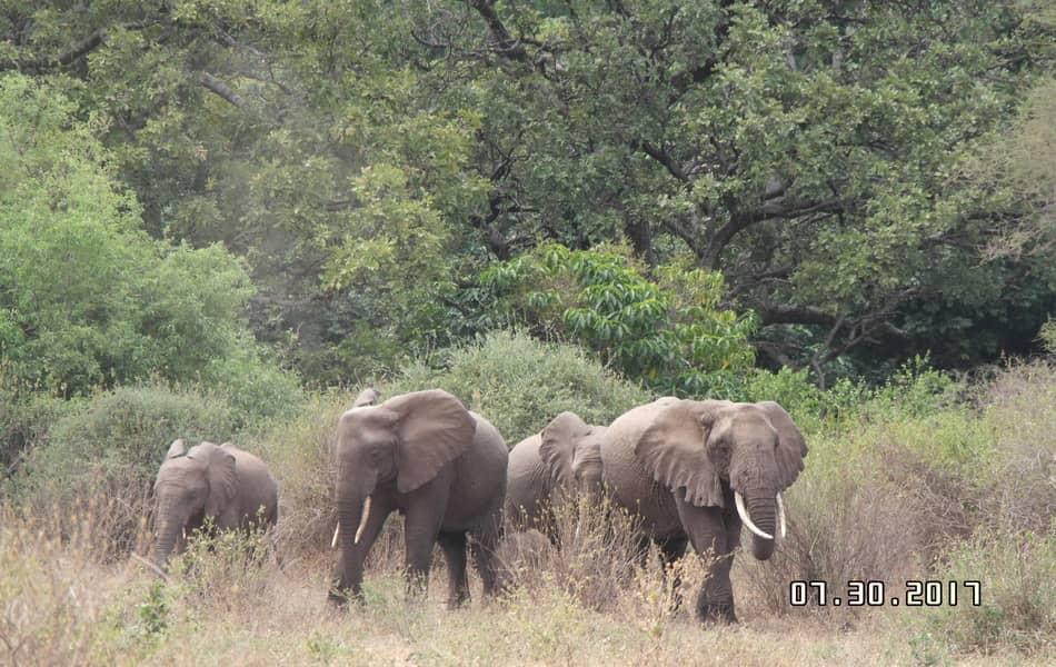 2 Days Camping Safari Tarangire National Park/Daily Joining Group