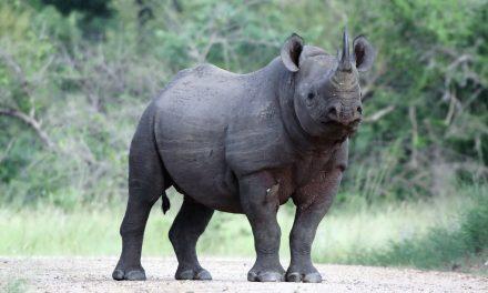 Tanzania Safari Ngorongoro and Zanzibar